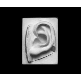 Orecchio - Particolare anatomico - 114n