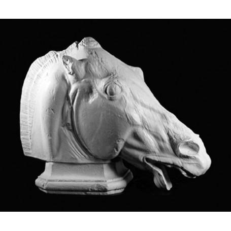 Testa di cavallo - 119a
