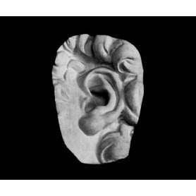 Orecchio - Particolare anatomico - 126n